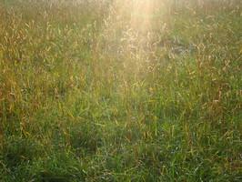 Spätsommerstrahlen im Gras